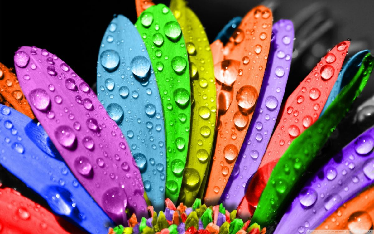 colorful_flower-wallpaper