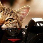 14221Photograph about the cat holding nikon camera crop1 150x150 - Как добавить поиск Google себе на сайт