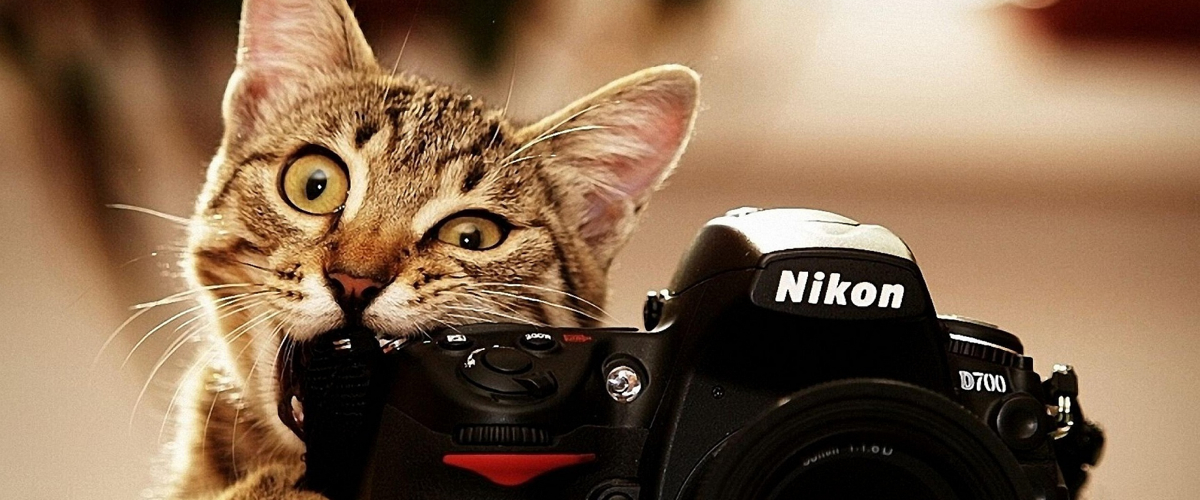 14221photograph-about-the-cat-holding-nikon-camera-crop1