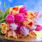 wallpapers flowers 3 150x150 - Как установить Facebook Remarketing/Retargeting Pixel в Wordpress